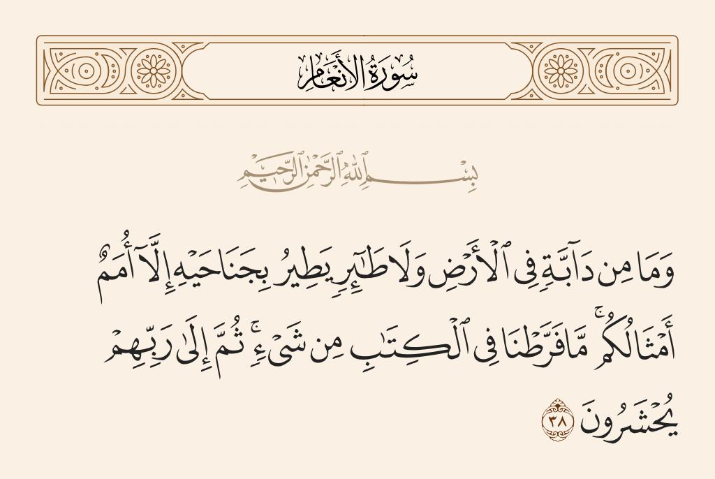 سورة  الأنعام الآية رقم 38