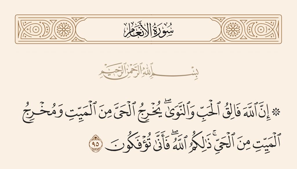 سورة  الأنعام الآية رقم 95