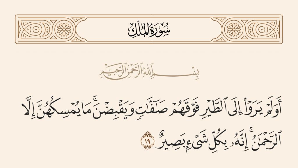 سورة  الملك الآية رقم 19
